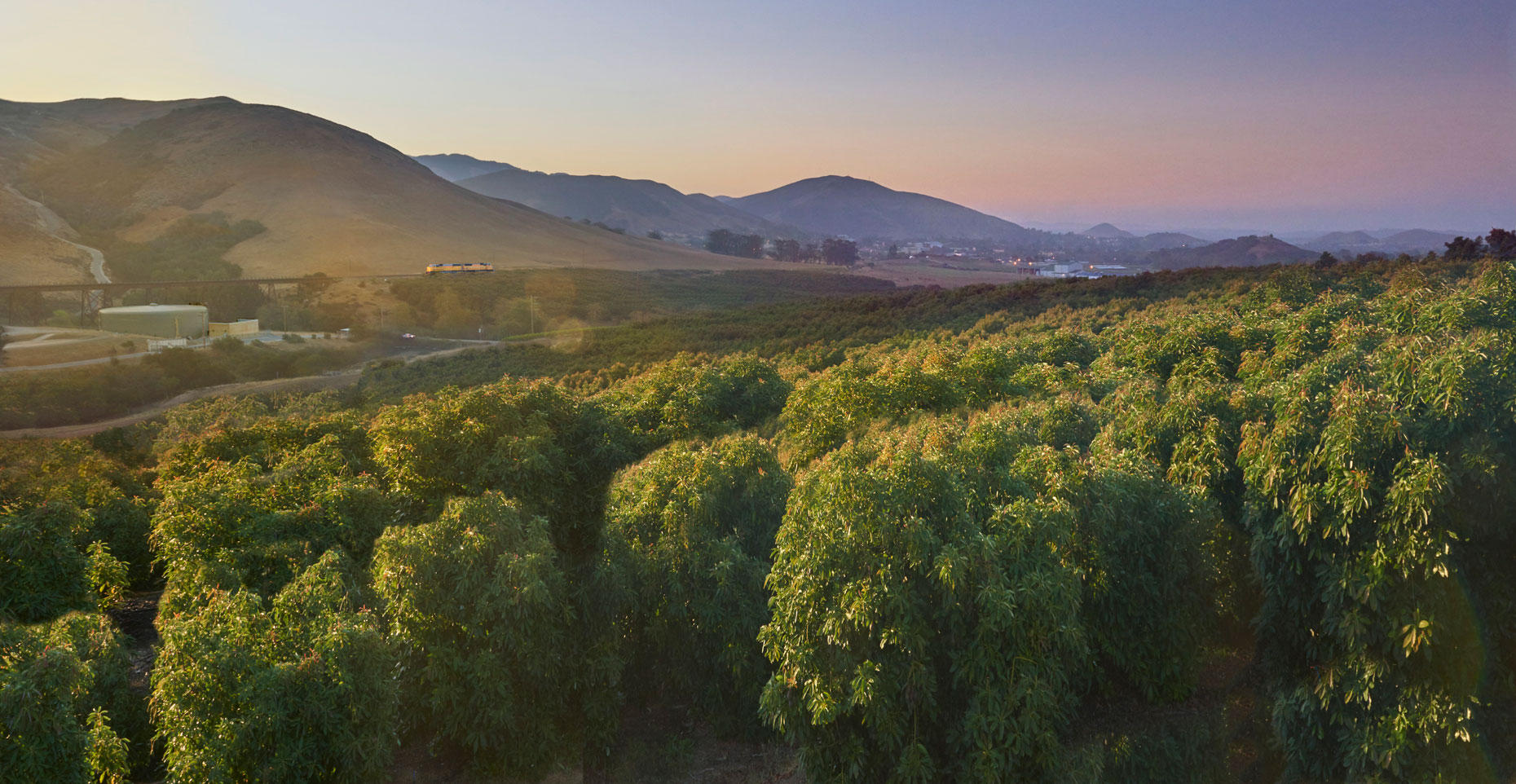 Avocado-orchard-at-sunrise-central-coast-of-California-by-Los-Angeles-farm-photographer