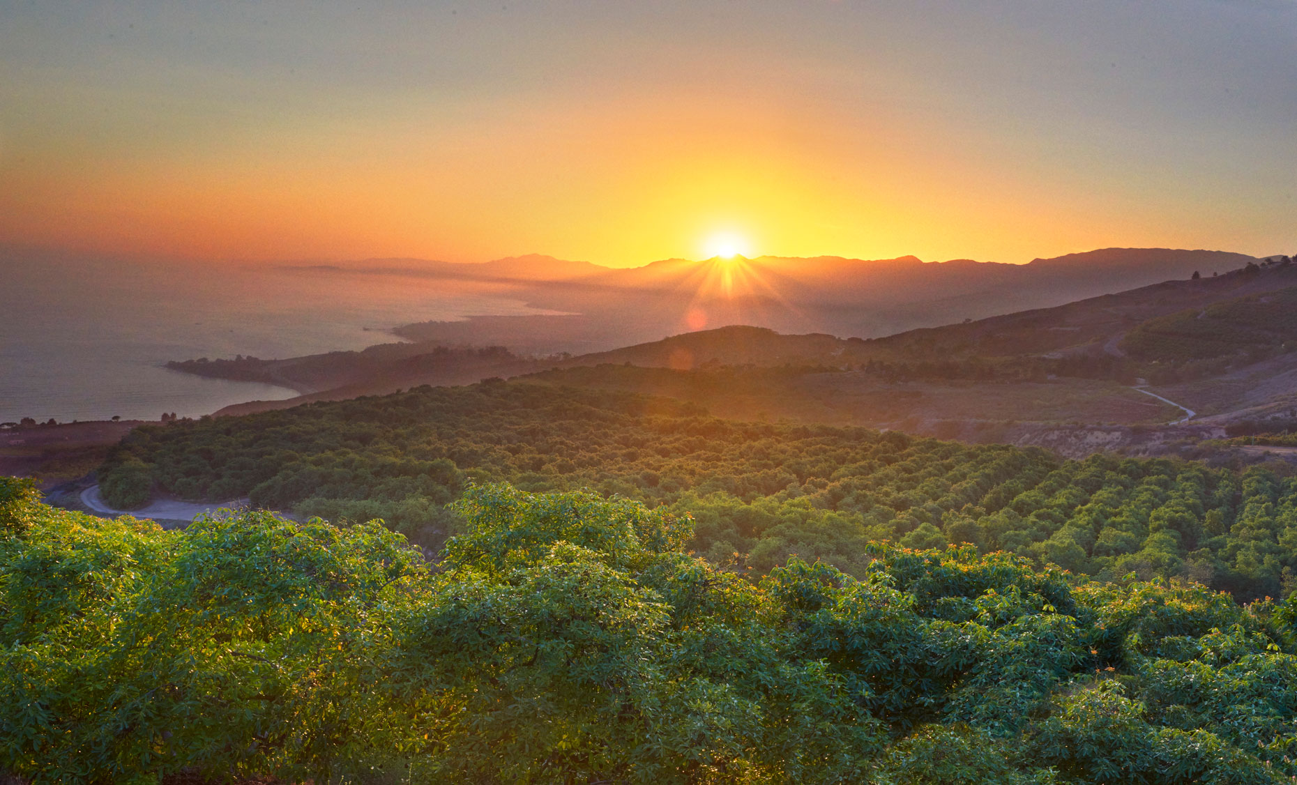 Avocado-orchard-at-sunset-on-the-central-California-coast-with pacific-coast-ocean-in-background.-by-Los-Angeles-farm-photographer-Joe-Atlas.