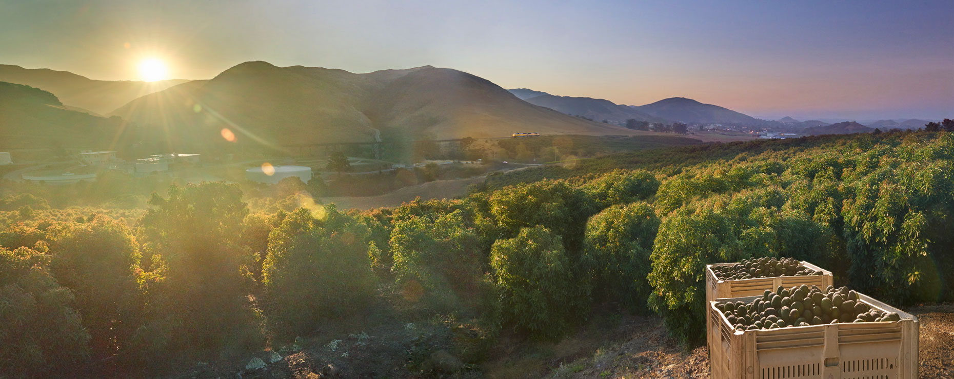 Avocado-orchard-with-picked-avocados-in-bins-at-sunrise-central-coast-of-California-by-Los-Angeles-farmland-photographer-Joe-Atlas.