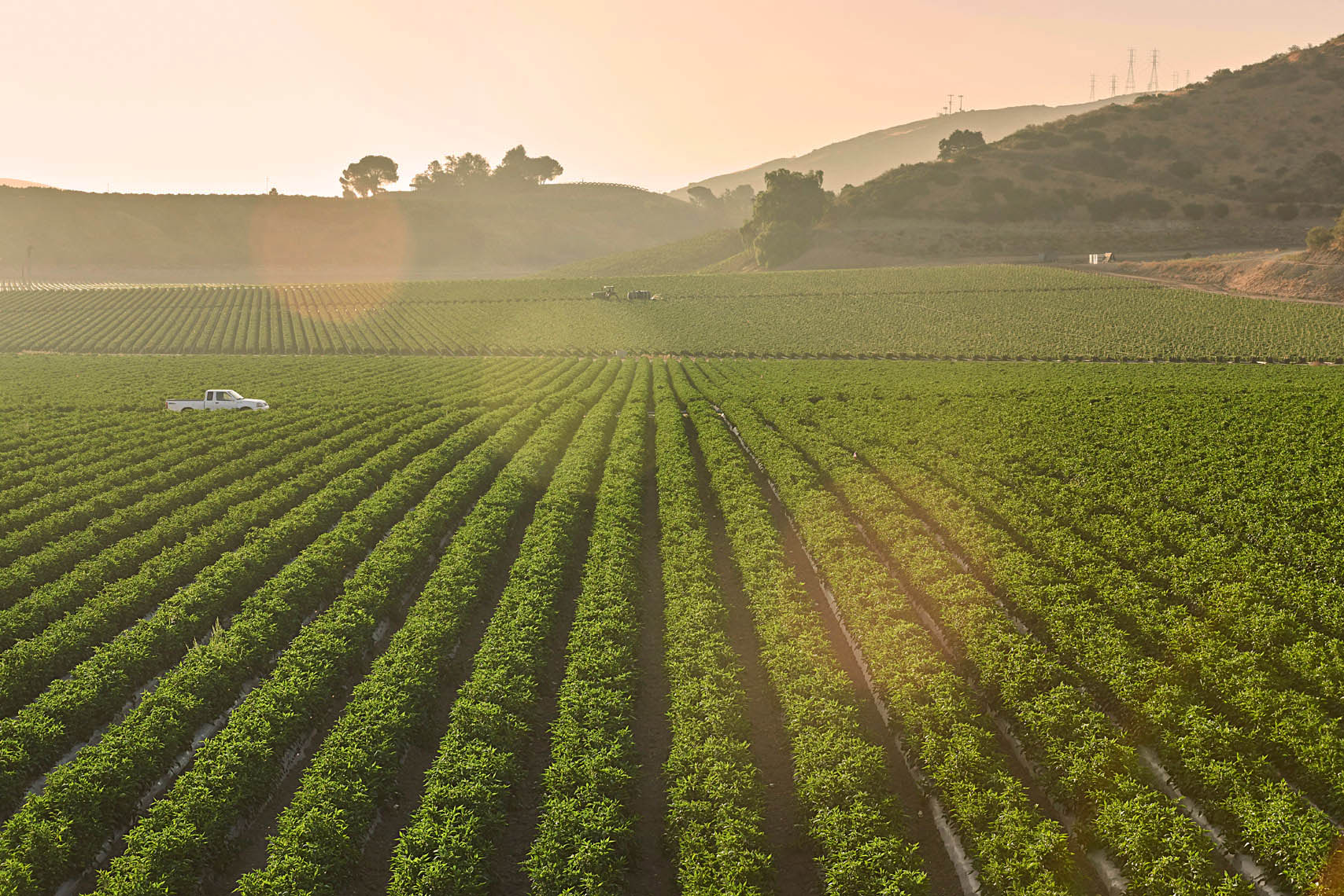 Bell-pepper-row-crops-at-sunriseBell-pepper-farm-field-at-sunset-with-mountains-in-the-background-by-California-landscape-photographer-Joe-Atlas...