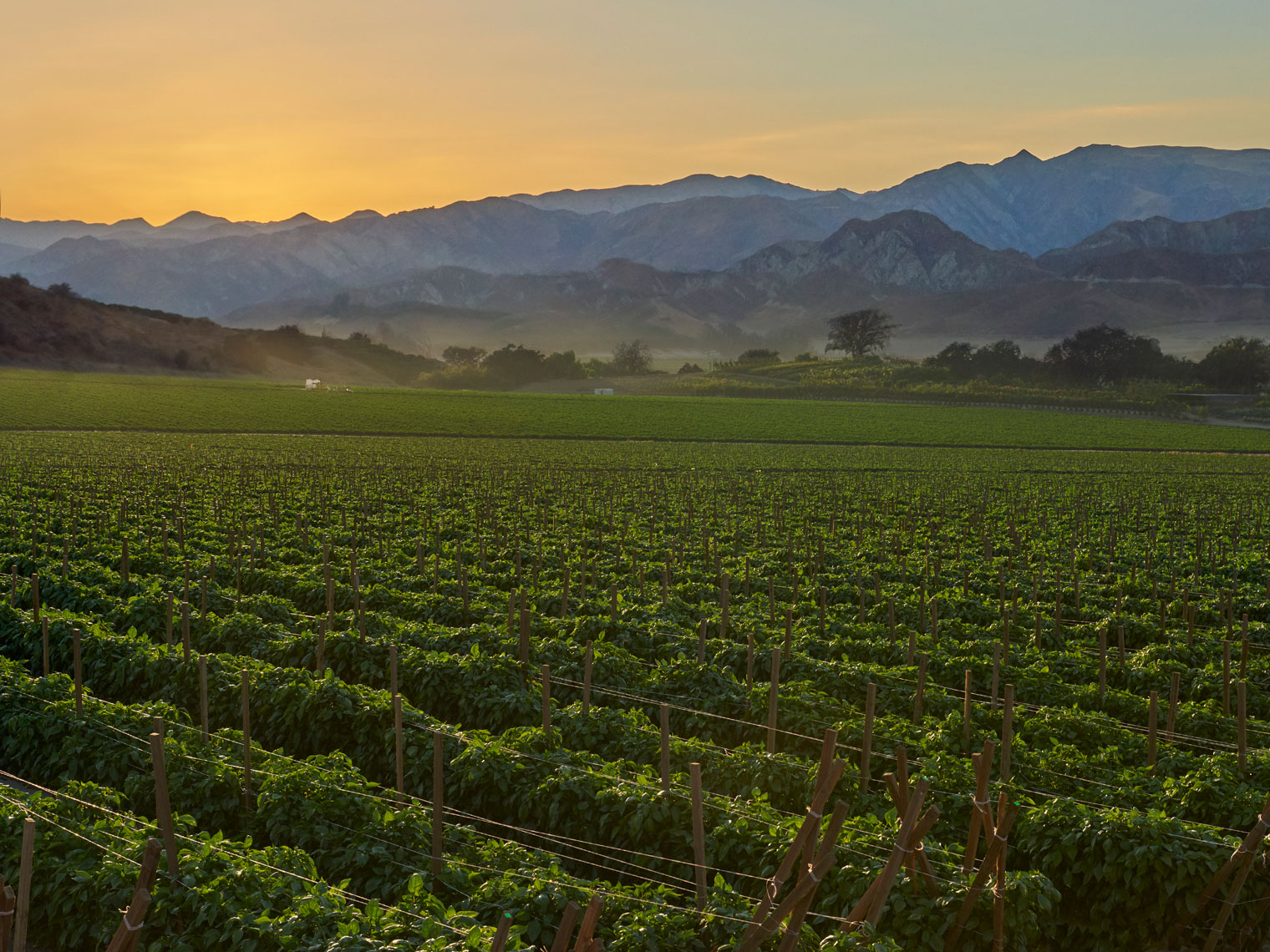 California-bell-pepper-farm-at-sunset-by-farm-photographer-Joe-Atlas.