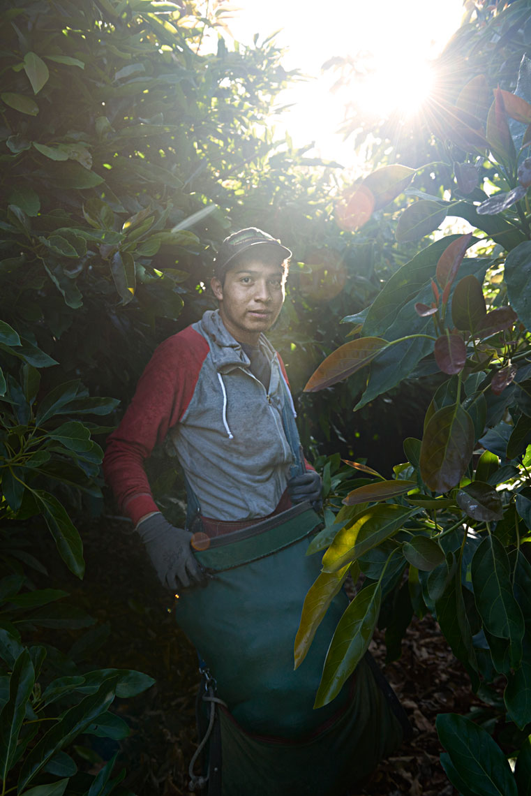 Portrait-photography-of-avocado-picker-holding-bag-of-freshly-picked-avocados